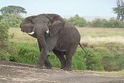 TOUR TANZANIA - FLIGHT + FULL BOARD - Tanzania Wonders 4x4